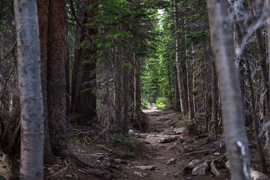 Wooded trail in Rocky Mountain National Park. GreatDistances / Matt Wicks