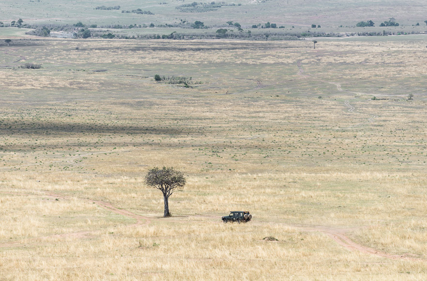 Game drive in progress. Maasai Mara. GreatDistances / Matt Wicks