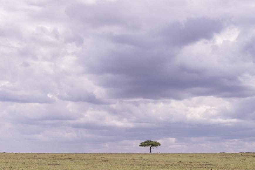 purple storm clouds over the plains of Maasai Mara, Kenya. GreatDistances / Matt Wicks
