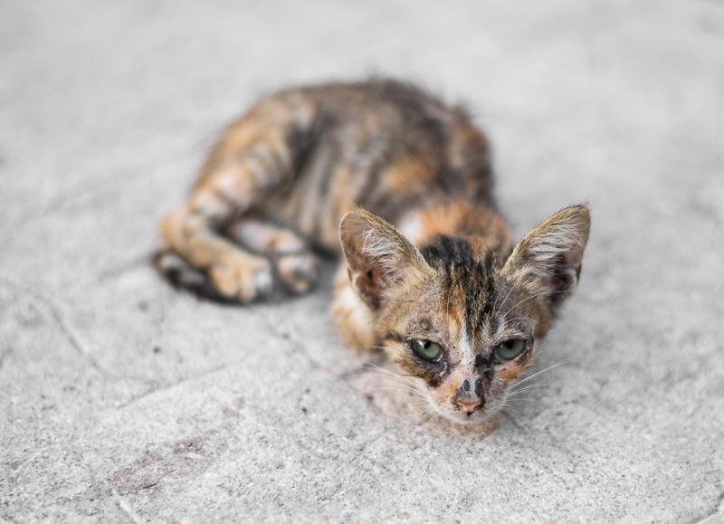 tiny kitten in Lamu, Kenya. GreatDistances / Matt Wicks