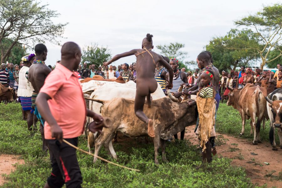 Boy leaps onto the back of a bull in a Hamar Bull Jumping Ceremony - South Omo Part 2 - GreatDistances / Matt Wicks