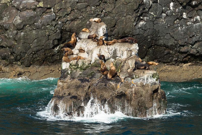 Steller sea lions sun themselves on a rock in Kenai Fjords National Park. Near Seward, Alaska. GreatDistances / Matt Wicks - Two Weeks in Alaska: Selected Photos
