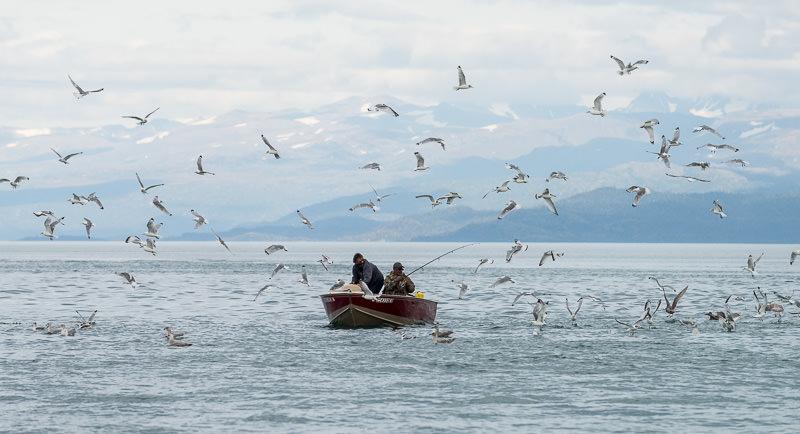 Fishermen surrounded by gulls in Katchemak Bay. Homer, Alaska. GreatDistances / Matt Wicks - Two Weeks in Alaska: Selected Photos