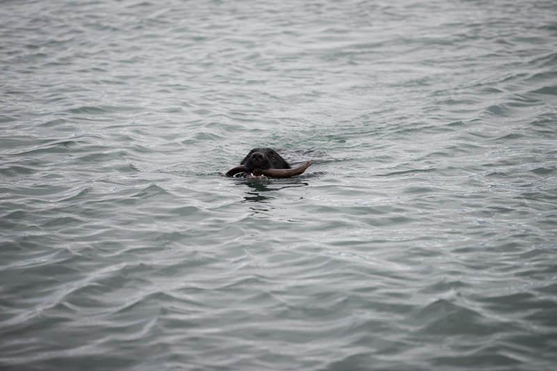 Playing fetch in the cold waters of Katchemak Bay. Homer, Alaska. GreatDistances / Matt Wicks - Two Weeks in Alaska: Selected Photos