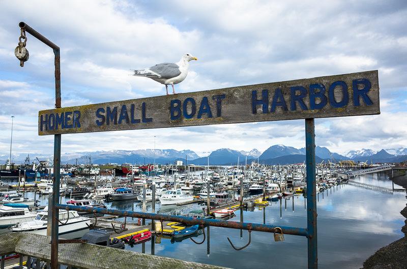 Homer Small Boat Harbor. Homer, Alaska. GreatDistances / Matt Wicks - Two Weeks in Alaska: Selected Photos
