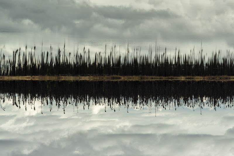 Trees burned by a forest fire, reflected in a pond. Near Denali National Park, Alaska. GreatDistances / Matt Wicks - Two Weeks in Alaska: Selected Photos