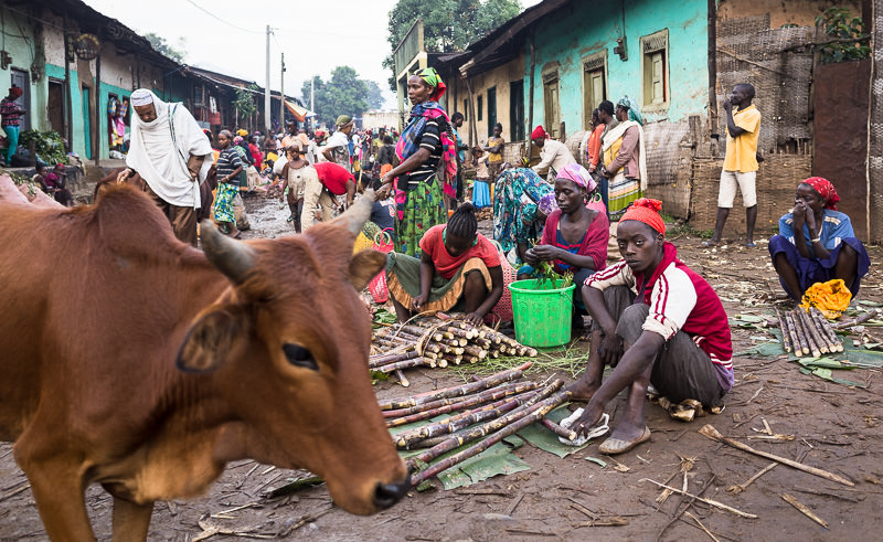 Sugar cane sales and passing cow at Jinka's market. Photographing the Tribes of South Omo, Ethiopia - GreatDistances / Matt Wicks