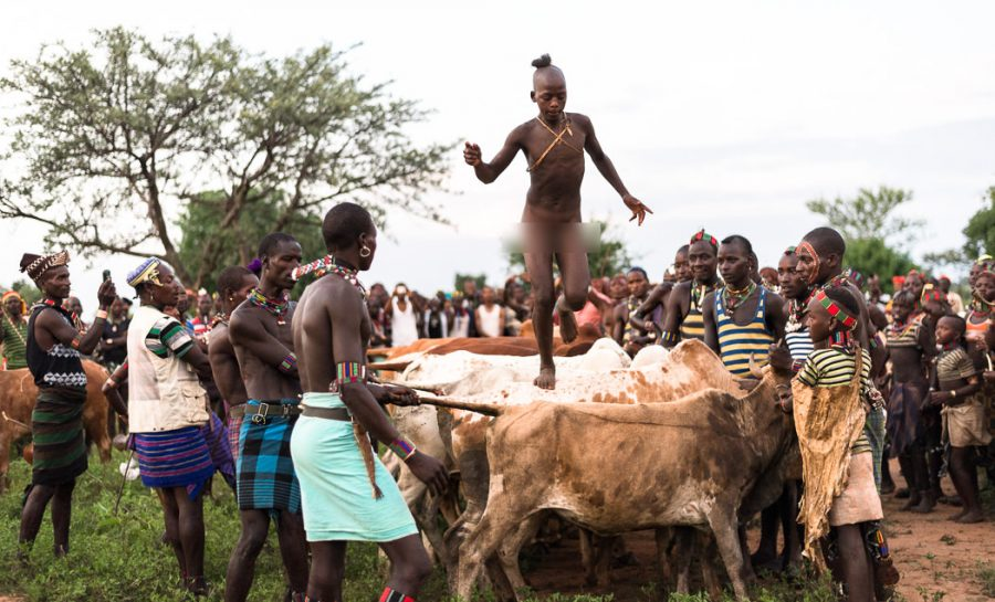 Image result for picture of Bull jumping in Ethiopia
